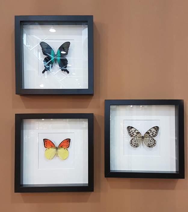 trendstrade-b2b-butterfly-interior-sea-animals-musthaves-trends-exposant-vlinderwereld-1